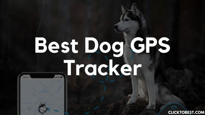 Best Dog GPS Tracker [2020]- The Best Today